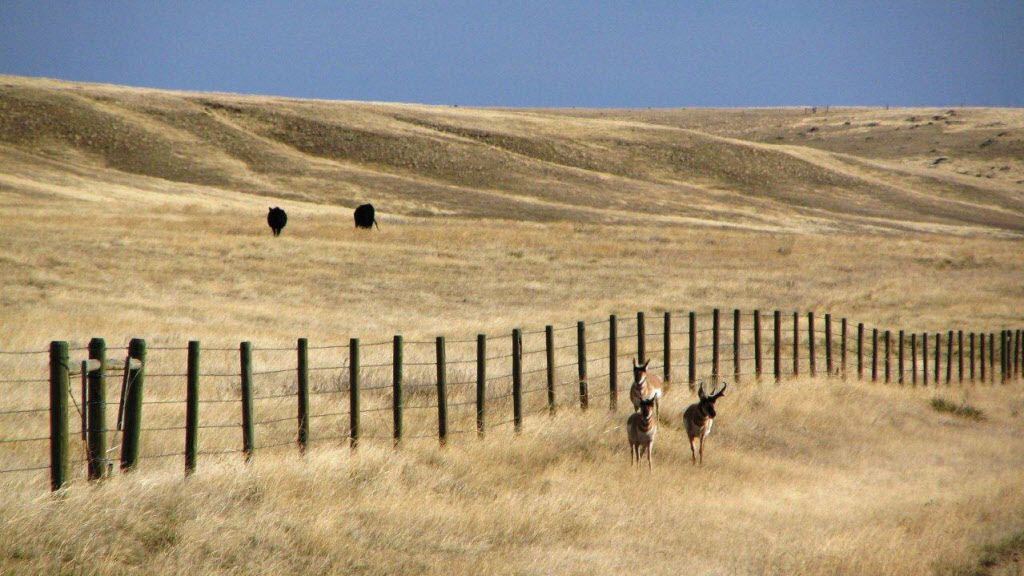 This undated photo shows the N Bar Ranch in central Montana.  The ranch is one of several properties purchased in the past two years by Dan and Farris Wilks of Texas. The N Bar is well known for its variety of wildlife and its cattle operation.