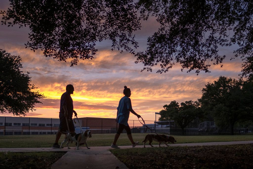 A couple walks their dogs near a spot at Ferguson Park in Far East Dallas where dogs mauled a man and woman Saturday morning.
