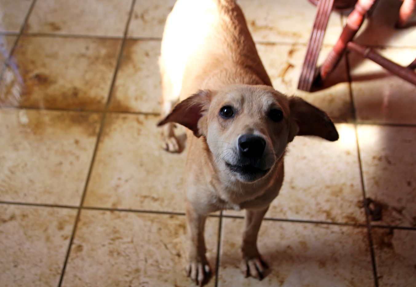 The SPCA will evaluate the animals for adoption or placement on a case-by-case basis.