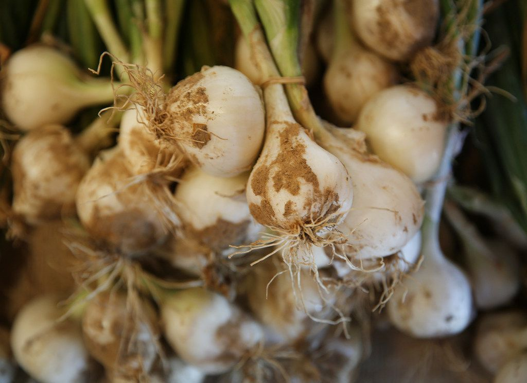 Onions from Gandy Farms in Edom, Texas, at The Farmacy.