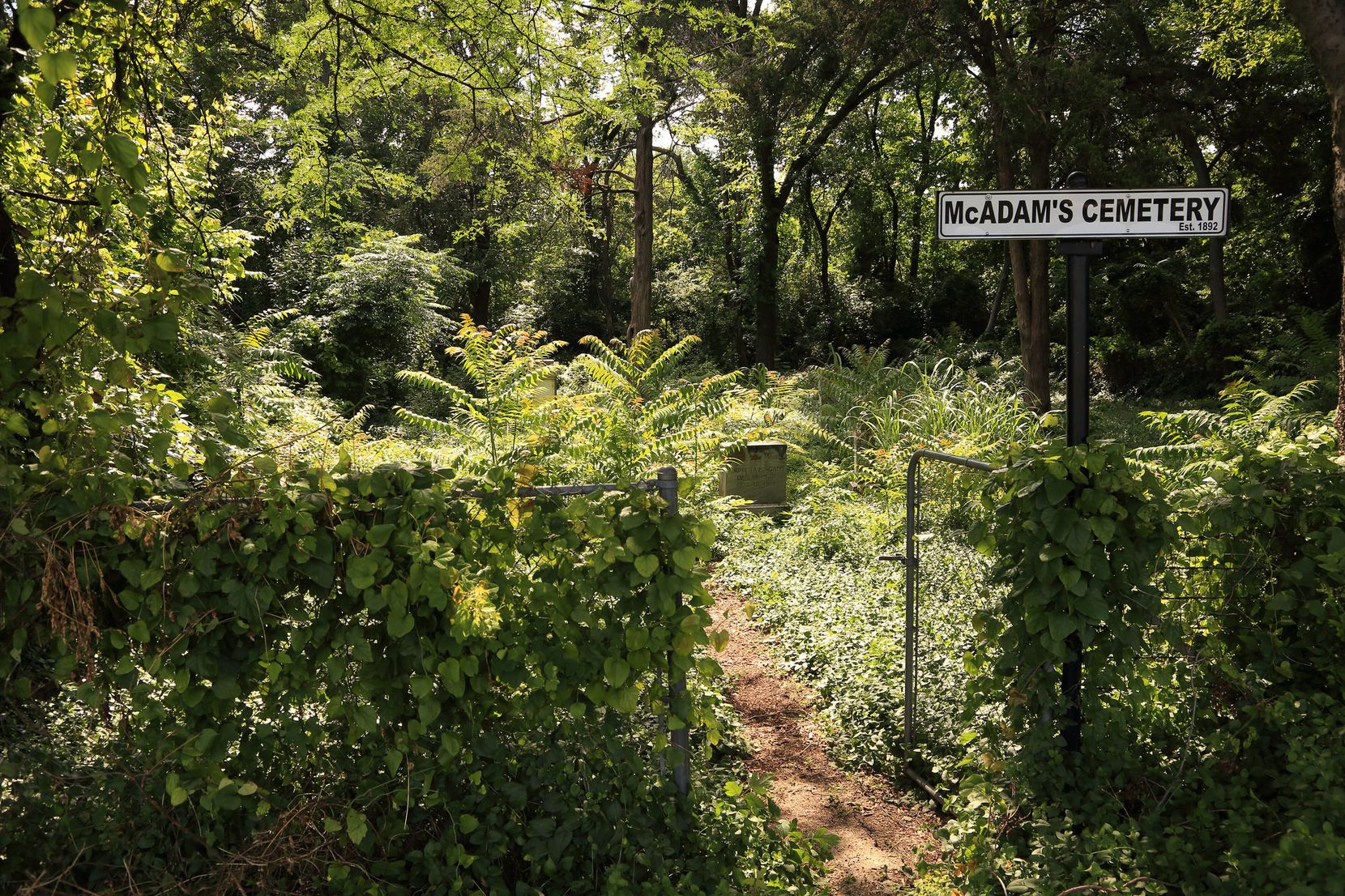 Speaking of weeds, McAdam's Cemetery in Oak Cliff is now buried in foliage following May rains. (Courtesy Barry Kooda)