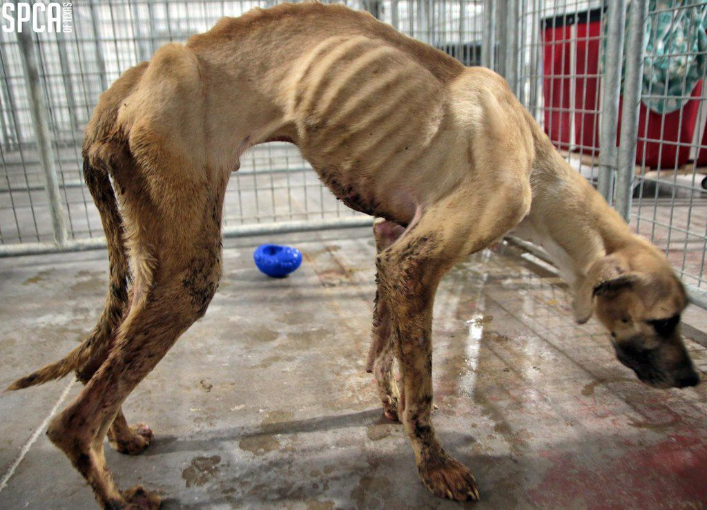 Northeast Dallas woman starved dogs, left them covered in