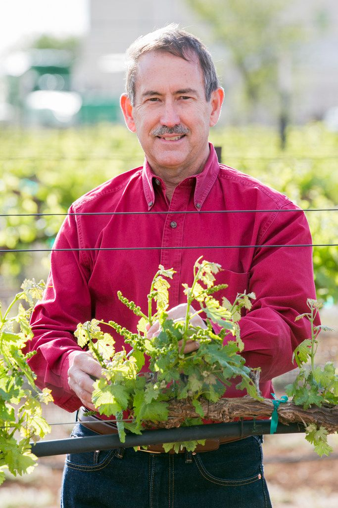 Ed Hellman, professor of viticulture and enology, Department of Plant & Soil Science, College of Agricultural Sciences & Natural Resources, Texas Tech University