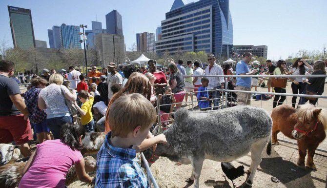 """El parque Klyde Warren tiene actividades para los niños durante la primavera. El año pasado hubo un """"petting zoo"""". (DMN/LOUIS DeLUCA)"""