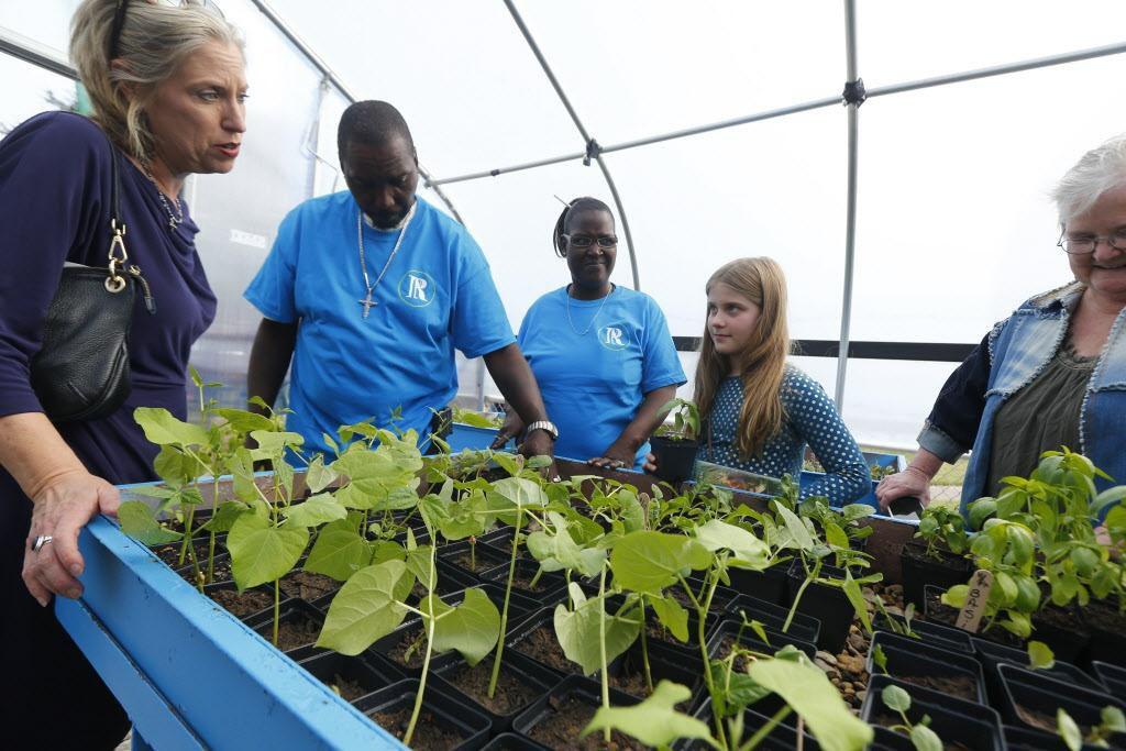 Suzanne Massey (izq.) junto a Charles Bryant, Anzinette Carter y Harper Massey platican sobre las plantas en el invernadora del MLK Freedom Garden. NATHAN HUNSINGER/DMN