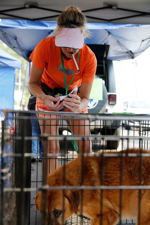 Jennifer Bane of Katy adds information for a dog that was dropped off at a makeshift tent city for animals run by Austin Pets Alive! in Katy on Sunday, September 3, 2017.  The nonprofit group is working on getting pets to their families as well as keeping the pets alive. (Vernon Bryant/The Dallas Morning News)