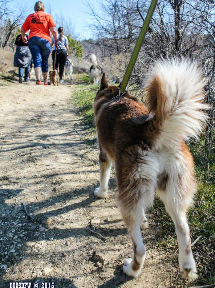 Dog About Town: An open house, a group hike and more things