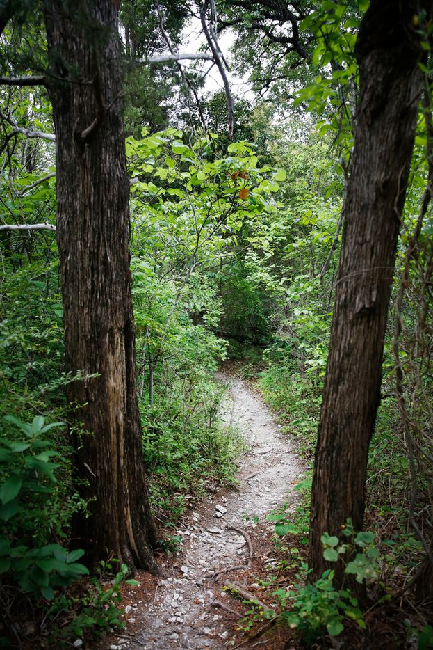 The Piedmont Ridge Trail in Dallas on Monday, June 18, 2018. (Rose Baca/The Dallas Morning News)