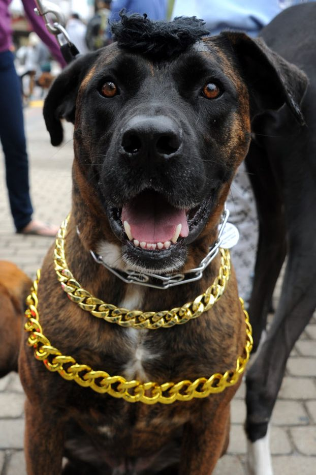 Hank Hewitt was pitying the fool, dressed as Mr. T for the pet parade.