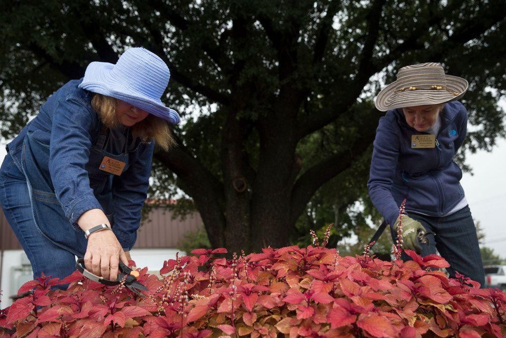Master gardeners Ellen Schwab (left) and Sherrie Walker snip the flowers off of coleus plants at the garden.