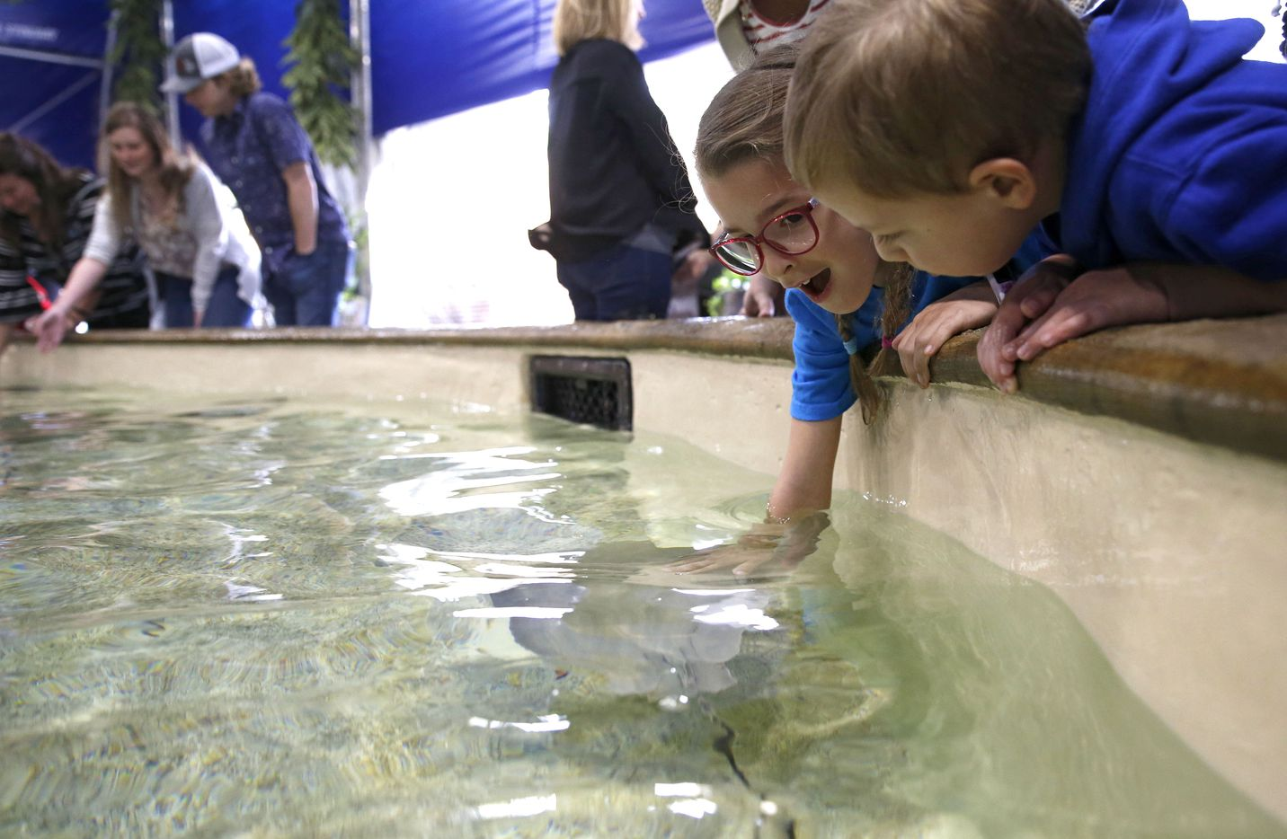 Jillian Heinrichs, 7, of Arlington reacts as she touches a stingray during the grand opening of Stingray Cove at the Fort Worth Zoo in Fort Worth on March 28, 2019. Stingray Cove is a new exhibit where people can touch different stingrays and some small sharks in a saltwater pool. The all-day entry fee is $5 ($4 for zoo members). There is also an option to feed the stingrays.
