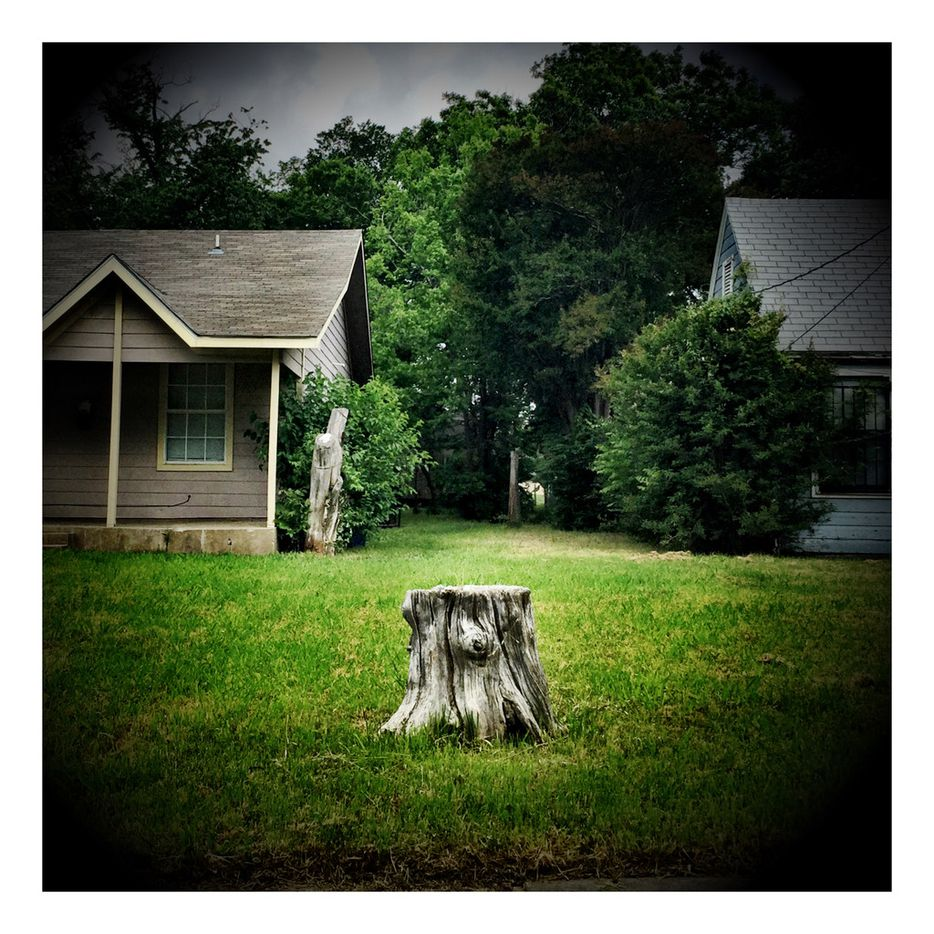 A tree stump marks a property line between two homes in South Dallas, one of many shots the photographer captured on his Meals on Wheels volunteer route.