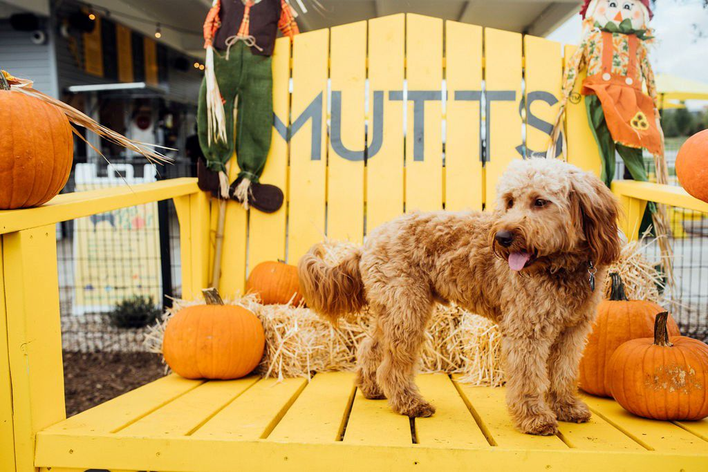 The annual Pupsgiving festivities include a pumpkin patch photo booth.