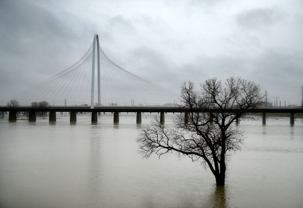 The rain-swollen Trinity River overflowed its banks Wednesday near the Margaret Hunt Hill Bridge in Dallas.