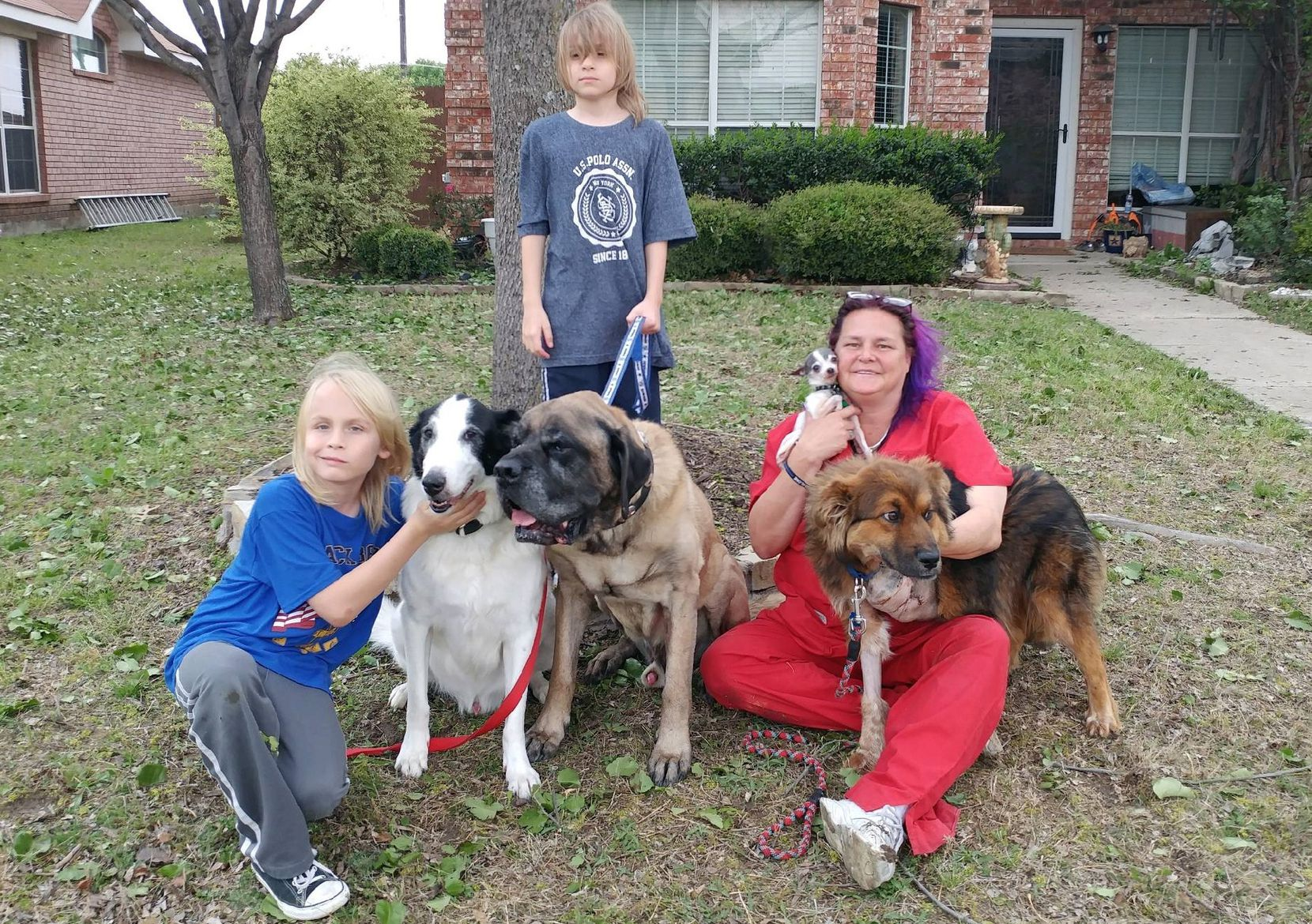 The rescued shepherd renamed Lt. Dan, far right, is shown with his new family in Little Elm. The family includes twins Brodie Lindstrom (kneeling) and Braedon Lindstrom, their mom, Kelly Lindstrom, along with smooth-coated collie Jack, the mastiff Beast and the Chihuahua named Pico.