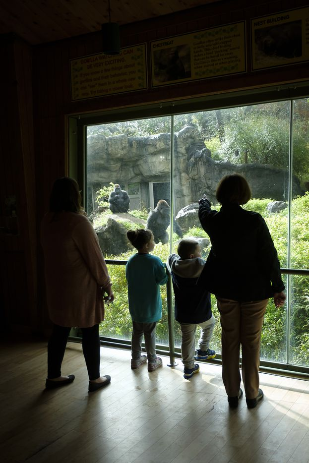 Julie Evans, 73, (right) talks with guests in the Gorilla Research Station at the Dallas Zoo on March 13. Evans has volunteered at the zoo since 1987 and will be inducted into its volunteer hall of fame Wednesday.