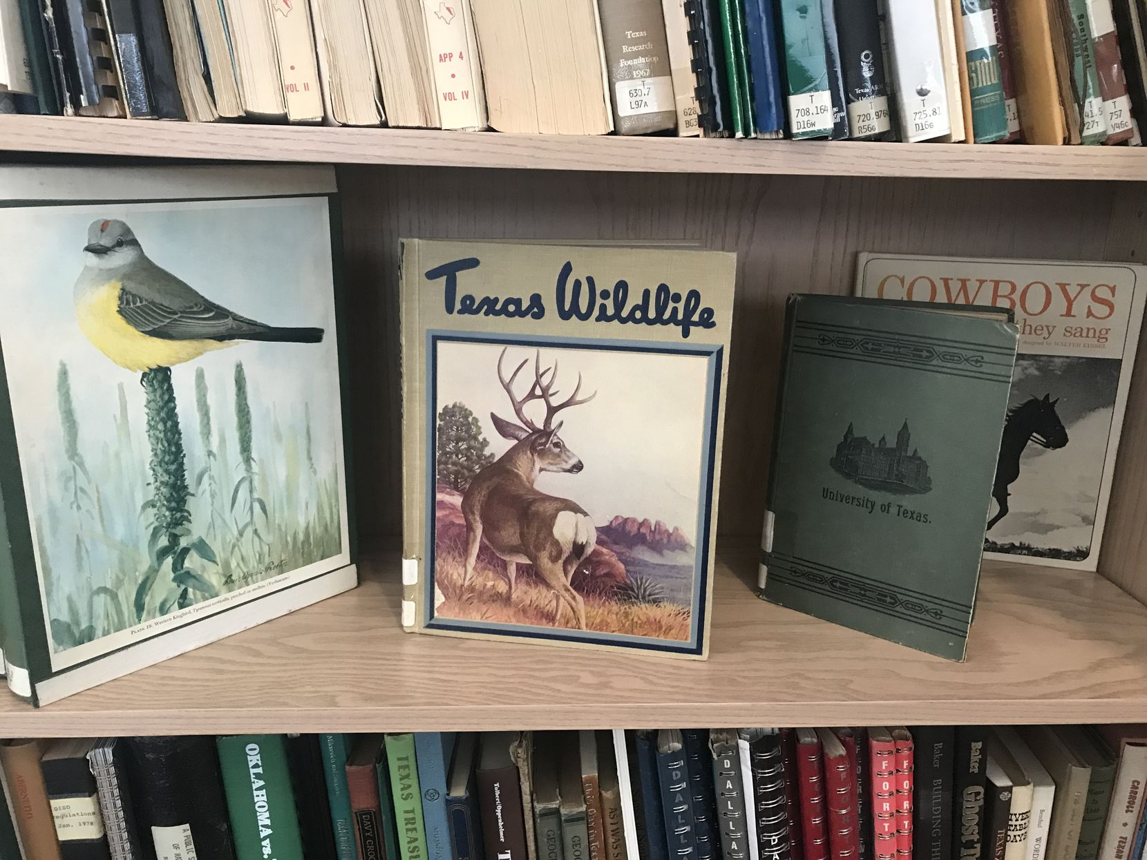 A Texana tableau featuring The Bird Life of Texas, Texas Wildlife, a 1891 guide to the University of Texas and Cowboys and the Songs they Sang.