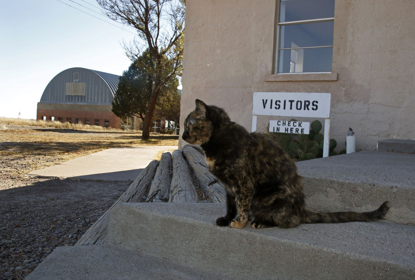 One of the resident cats sits on the steps of the visitor's center at the Chinati Foundation in Marfa. The building housing Donald Judd's 100 untitled works in mill aluminum, 1982-1986, is in the building at left. (Guy Reynolds/The Dallas Morning News)