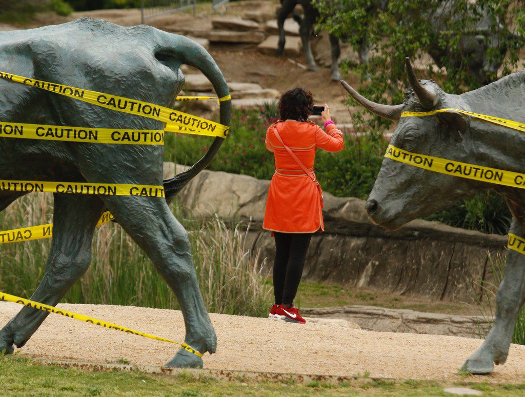 A tourist from China is framed by two of the bronze steers, created by Glen Rose artist Robert Summers, at Pioneer Plaza in downtown Dallas.
