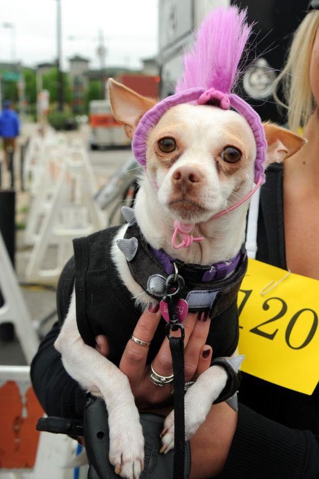 Lucy wins the Best Deep Ellum award for her purple mohawk.