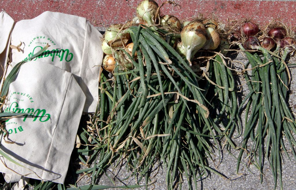 Onions were gown and harvested at the State Fair of Texas Big Tex Urban Farms in Fair Park.