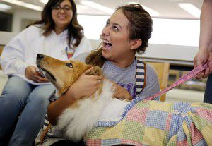 Julie Arellano, a student at Mountain View College, laughs as she pets Daisy, an eight-year-old therapy dog. (G.J. McCarthy/The Dallas Morning News)