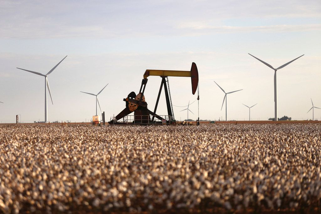 Pump jacks and wind turbines are visible inside of a cotton field near Lamesa.