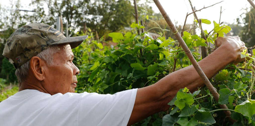 Song Soth, 72, works in the East Dallas Community and Market Garden.