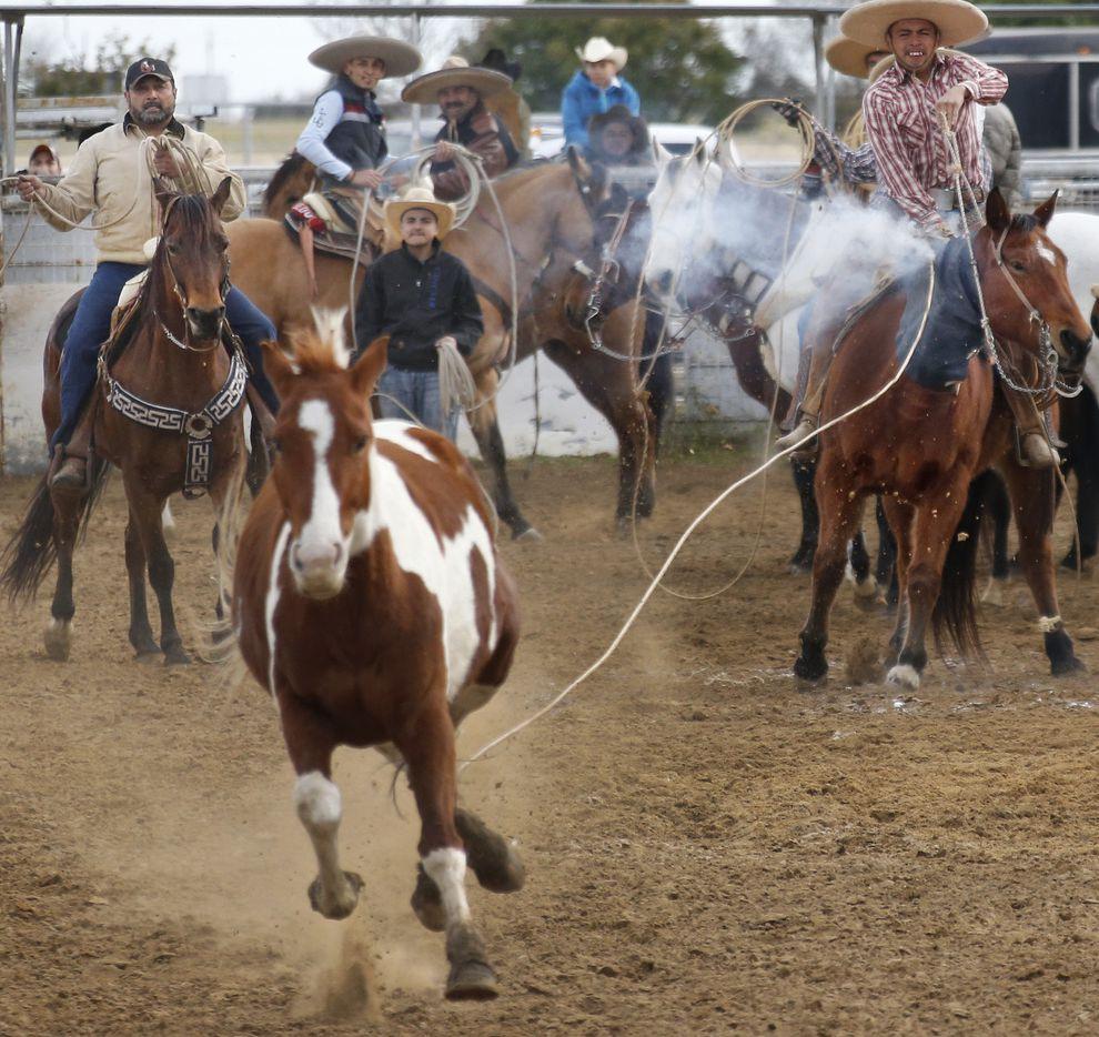 La Fiesta Charra 2019 de Lewisville será este 1 de junio. (Louis DeLuca/The Dallas Morning News)