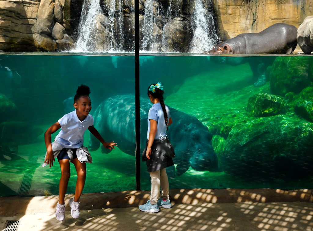 Fourth graders from Jackie Carden Elementary, Arianna Shabazz (left) and Kimberly Romero were excited to see the hippopotamus swimming in their new tank.