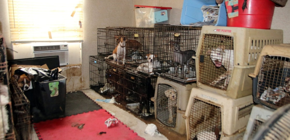 Over 100 animals — dogs, cats and a bearded dragon — seized ...