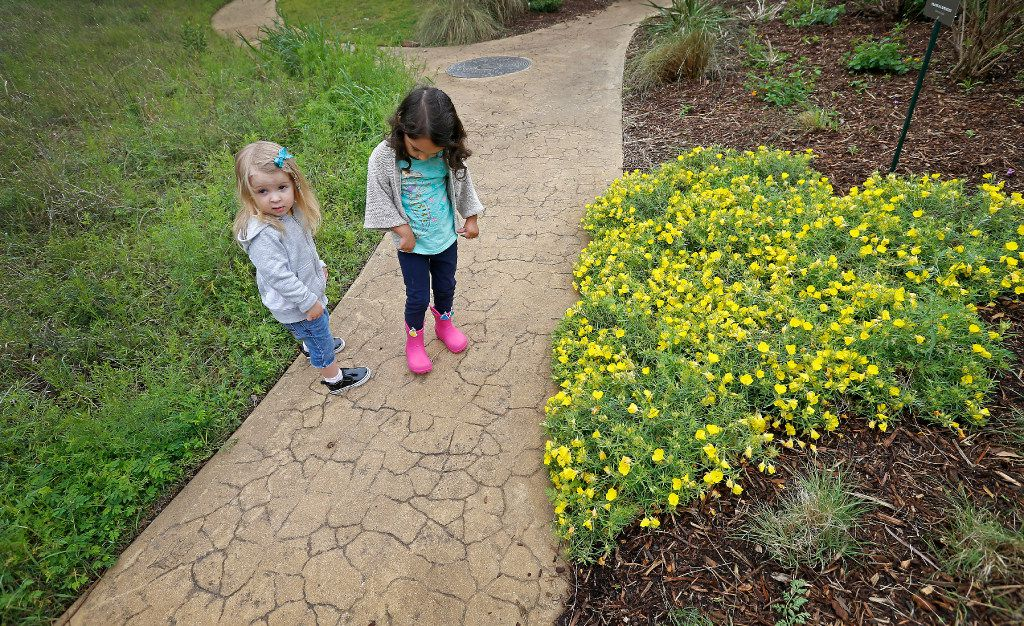 Inez Beltran (right), 3, and Nina Toler-Wells, 2, walk on the trail at Twelve Hills Nature Center in Dallas. Both are enrolled in Seed Preschool, which meets in a refurbished bus. (Jae S. Lee/The Dallas Morning News)