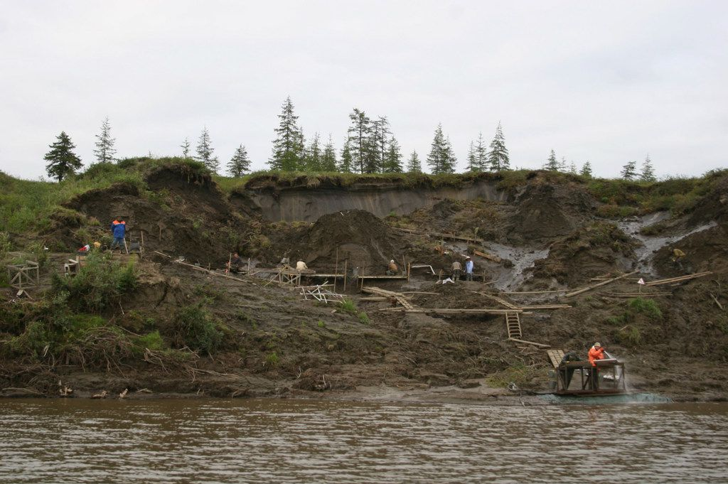 Vladimir Pitulko's team excavates the Yana River site, where the two milk teeth were found.