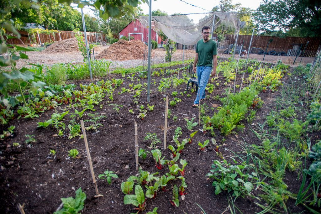 Jefferson Braga walks through one of the many vegetable plots on his property in Irving.