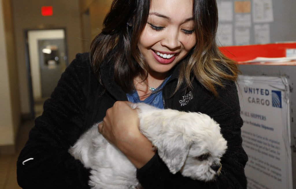 Jessica Urbina reacts after being reunited with her dog, Bam Bam, a 7-year-old Shih Tzu, at the United Airlines Cargo facility at DFW Airport, Monday, November 14, 2016. Bam Bam was stolen from Urbina's front yard four years ago on Easter Sunday, but was recently found by a good Samaritan in Las Vegas who took him to a local vet who scanned for the implanted microchip.