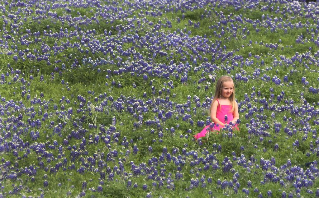 A field of bluebonnets made the perfect setting for photos on the property of the J.C. Penney's headquarters campus in Frisco last year.