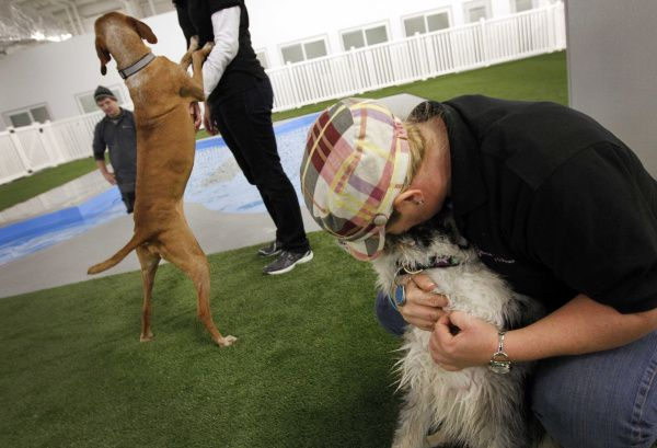 Class project turns into pet resort that caters to travelers