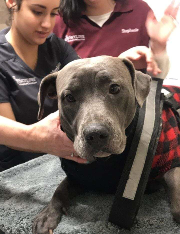 An open house Saturday at Animal Emergency Hospital of North Texas will include screening for dog blood donors. (Canine Blook Heroes)