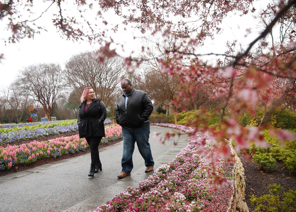 """Stephen McGee and Jamara Rhodes-McGee stroll through the blossoms on the day of their second wedding anniversary at the Dallas Arboretum in Dallas on Friday, Feb. 22, 2019. The annual Dallas Blooms festival, themed """"Life's A Picnic,"""" runs Feb. 23 through April 7 and will include more than 100 varieties of spring-blooming bulbs and 500,000 tulips."""