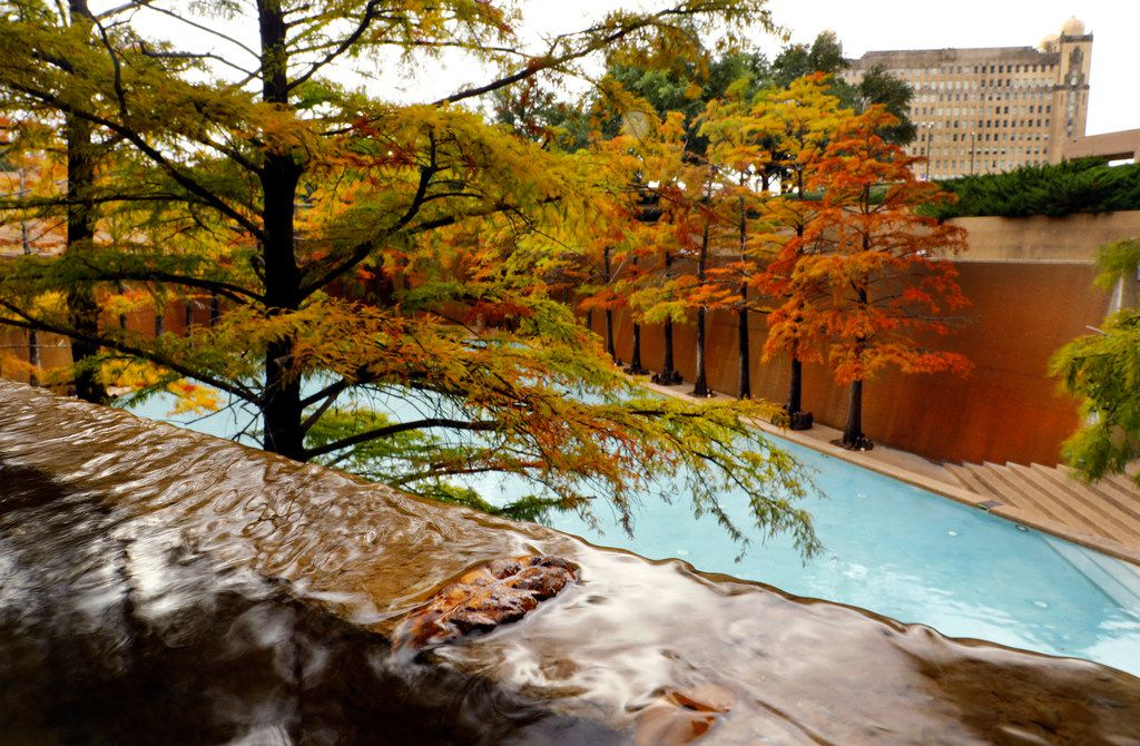 Fall colors on the cypress trees at the Quiet Water Pool, in The Fort Worth Water Gardens in October 2018.