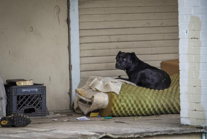 "A stray dog hung out on the porch of a vacant house on Pennsylvania Avenue in South Dallas on Wednesday. Council member Dwaine Caraway called for a ""more aggressive approach"" to keep stray dogs under control in the city."