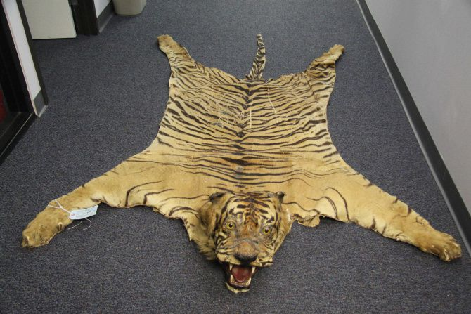 """Operation Wild Web cracked down on online wildlife trafficking, including items like tiger skins. """"We purchased a pretty wide array of animals,"""" said Capt. Greg Wiliford of the Texas Parks and Wildlife Department."""