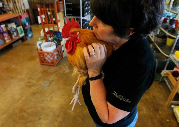 """Andrea Ridout, co-owner of the store, says that when people put George in their arms, """"they just melt."""""""