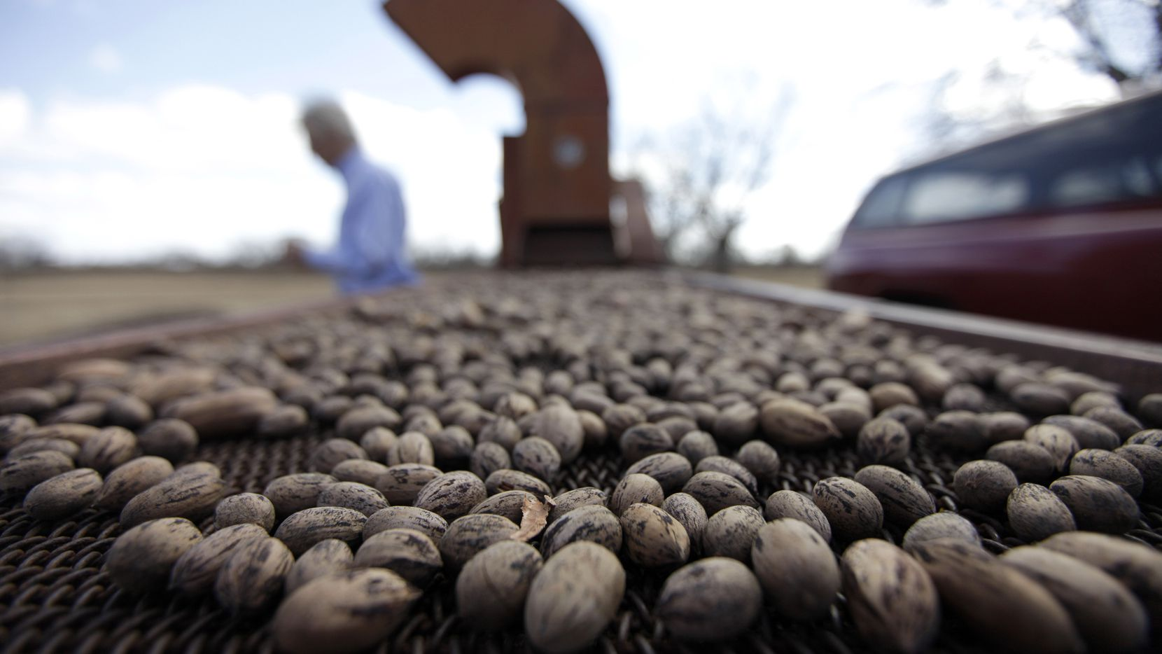 Pecans are sorted in Ellinger, Texas.