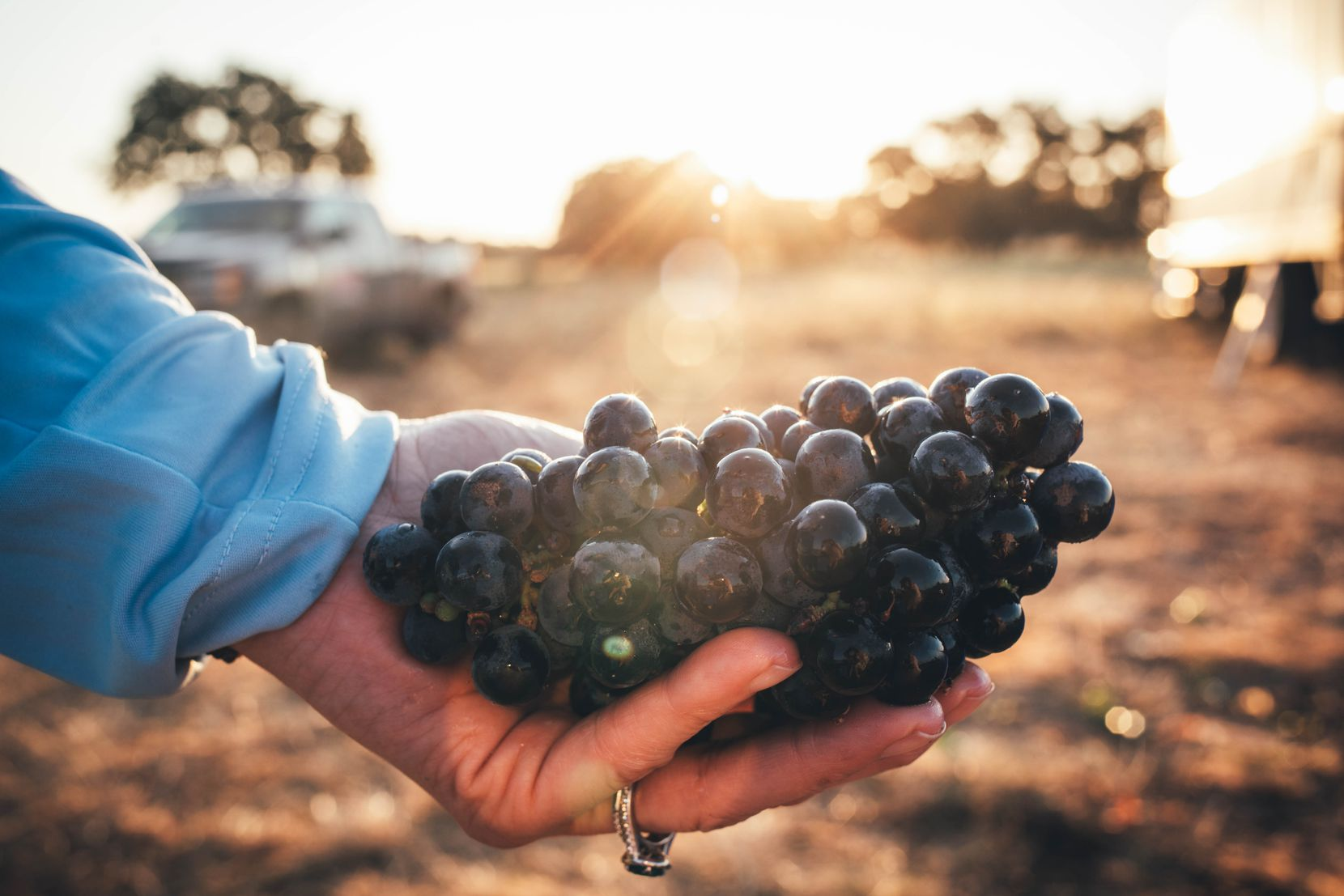 Bending Branch Winery and Tallent Vineyards share the first award of the Texas Sustainable Winegrowing Competition.