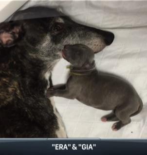 """Gia con su mamá, la cual ganó 26 premios """"Best in Show""""."""