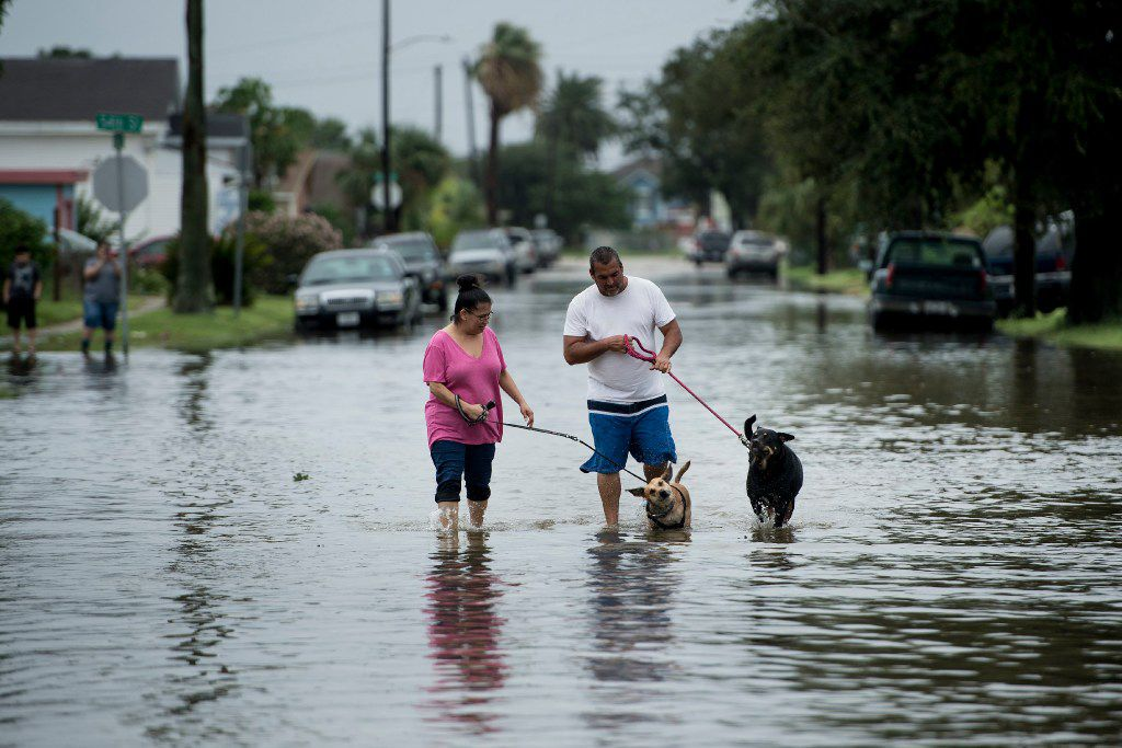 People walk dogs through flooded streets as the effects of Hurricane Henry are seen August 26, 2017 in Galveston, Texas. Hurricane Harvey left a trail of devastation Saturday after the most powerful storm to hit the US mainland in over a decade slammed into Texas, destroying homes, severing power supplies and forcing tens of thousands of residents to flee.