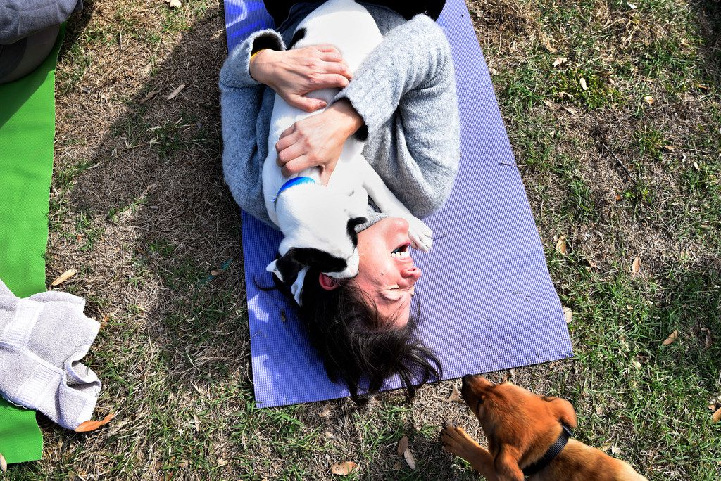 Teresa Martinez, 44, of Dallas, is playfully smothered by a dog during Puppy Yoga near the Northaven Trail in Dallas, Saturday morning, April 14, 2018. The yoga was conducted by CorePower Yoga and a portion of the proceeds benefited the Dallas based non-profit Artists for Animals. Puppies were provided by Operation Kindness.