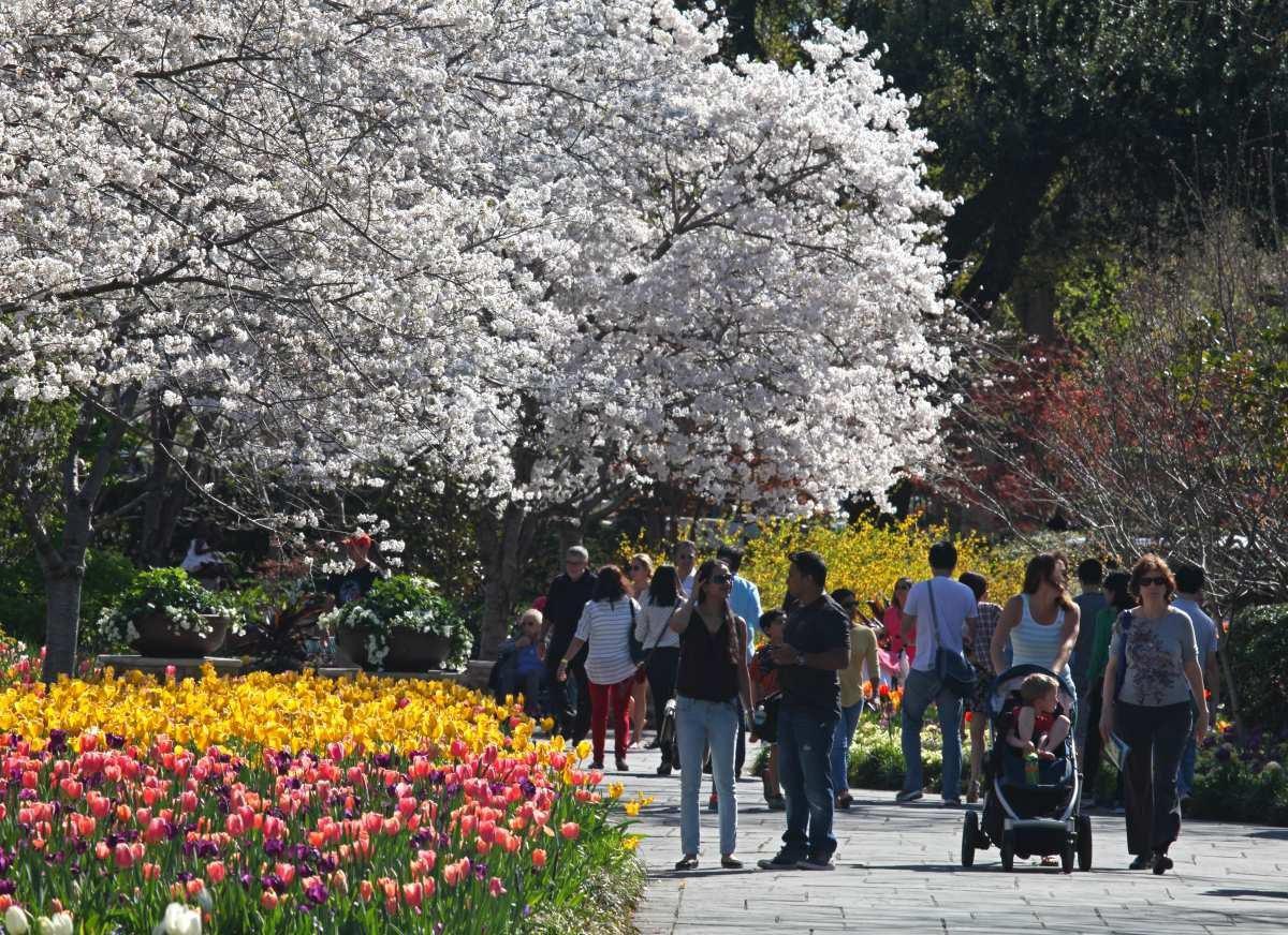El Dallas Bloom se puede disfrutar hasta este domingo en el Arboretum.(DALLAS ARBORETUM)