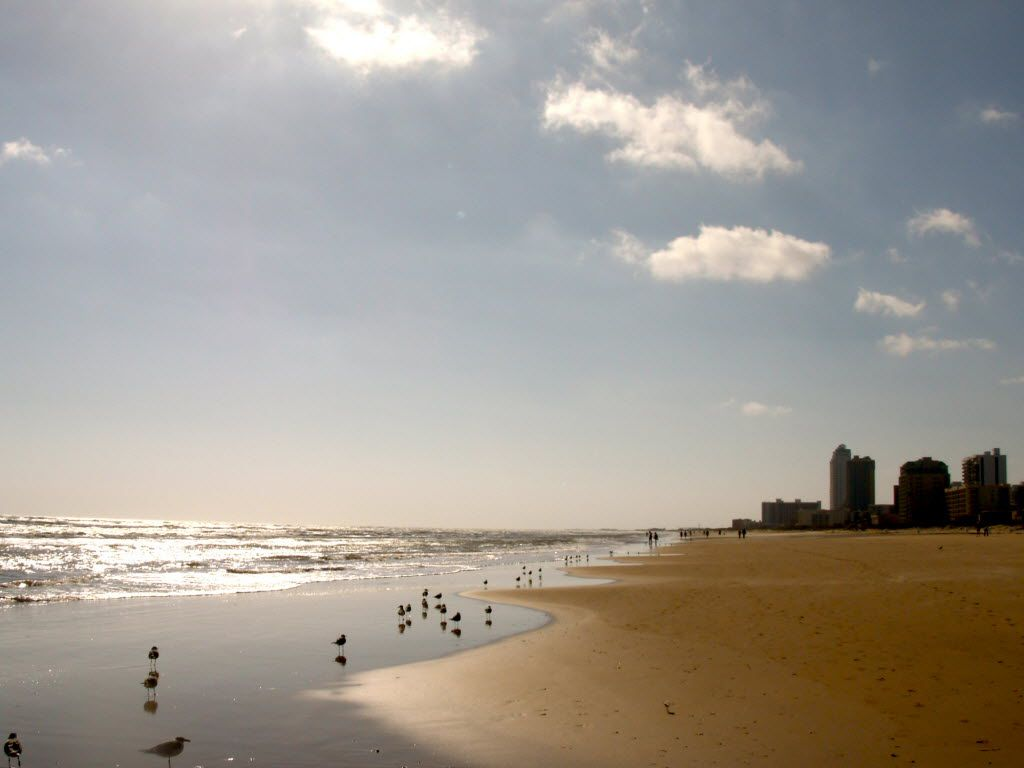 In a 2010 file photo, birds dot the beach on South Padre Island.
